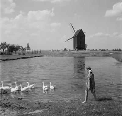 Girl with geese in Zduny with a windmill in the background, 1956.
