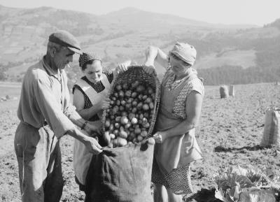 Field workers during the potato harvest at Piwniczna, 1963.
